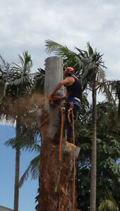Arbor Bizz tree Services / Tree Removal /  Castle Hill The Hills District Preview