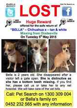 LOST CHIHUAHUA X - Please help! Gladesville Ryde Area Preview