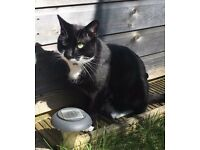MISSING Black & White Cat from WA5 3PN