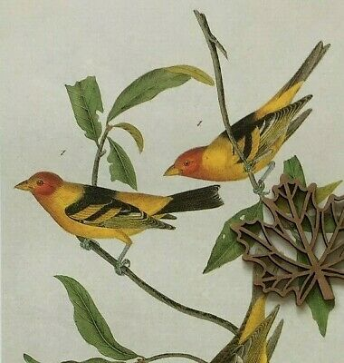 Color Art Print - Audubon Bird Art Print Bookplate Page MULTI COLOR BIRDS ** SEE VARIETY