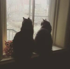 """Looking for someone to temporarily """"foster"""" my two (male) cats"""