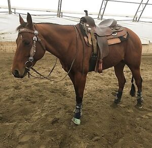 Penning Horse For Sale!