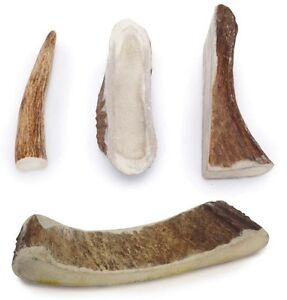 MOOSE ANTLER DOG DENTAL CHEWS Natural Way to Clean Your ...