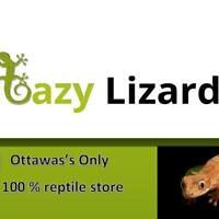 Lazy Lizards - Available Reptiles