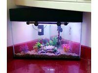 Triangular Corner Fish Tank and accessories