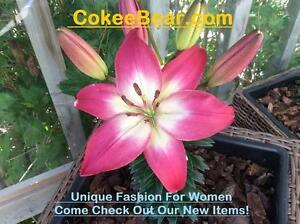 **COKEE BEAR** Online Women's Clothing Boutique