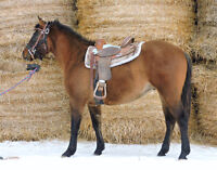 Ropers/Ranchers Look Here!  Started, Stocky Dun AQHA Gelding!