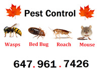 100% GUARANTEED REMOVAL - ALL PESTS (647 961 7426)- Excellence!