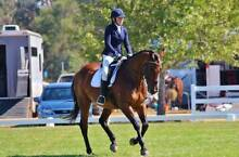 Quality Eventer Leopold Geelong City Preview
