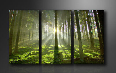 Bilder auf Leinwand Bäume 160cm XXL 1130 % Alle Wandbilder fertig gerahmt
