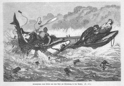 Störe, Stör, Störfang mit dem Netz, Original-Holzstich von 1879