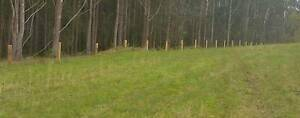 Split Timber Posts & Strainers Glenreagh Clarence Valley Preview