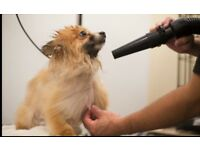 Very Cheap Dog grooming business for sale in Romford