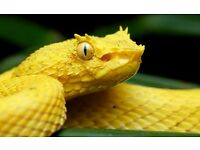 Reptile Rehome Manchester