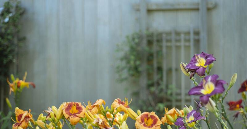 Image by The Garden Glove