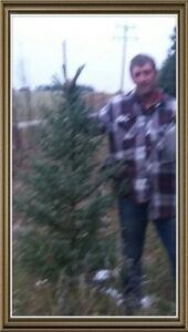 5 To 6 FT spruce trees FOR SALE!!!!!