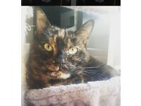 URGENT NEEDS REHOMING 6 YEAR OLD CAT BEAUTIFUL GIRL