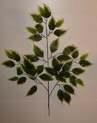 12 NEW GREEN/WHITE  FICUS  LEAF BRANCHES W/42 LEAFS