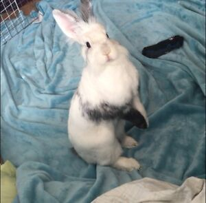 Do your rabbits need a new home?