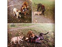 South West London Dog Walker/Sitter/Trainer