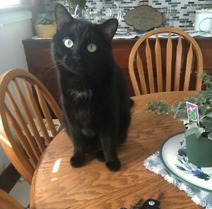 WANTED: MISSING BLACK CAT
