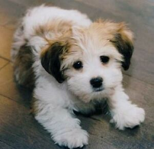 Wanted: small dog or puppy for loving family