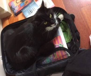 kaleen lost cat