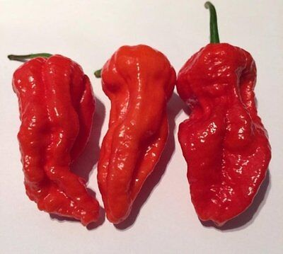 Freshly Harvested Trinidad Scorpion 7 Pot Yellow Hot Pepper Seeds-W 106 25