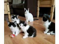 Kittens Need A Home