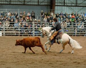 Don't miss BC's Largest Equine Event