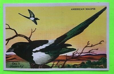 Jack Murray  Equitable Life Insurance Co  Bird Cards  American Magpie