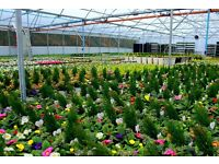 Full time assistant grower required at Dundonald Nurseries