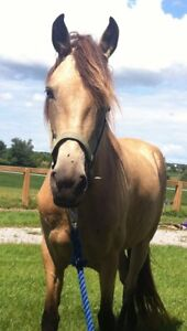Wonderful Trail Horses For Sale! - Welcome!