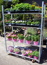 PLANT NURSERY DANISH TROLLEY NDT135 Brookvale Manly Area Preview