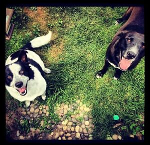 Dog Walking and Cat Minding Services in London Ontario