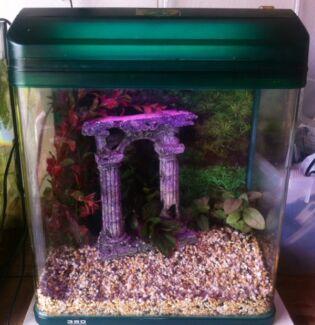 Green fish tank setup - 34 litres - MUST SELL ASAP Frankston Frankston Area Preview