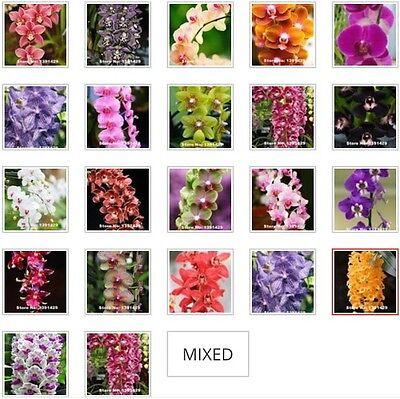 US- 50Pcs Mixed Colors Phalaenopsis Seeds Bonsai Balcony Flower Orchid