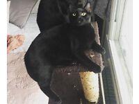 MISSING BLACK CAT