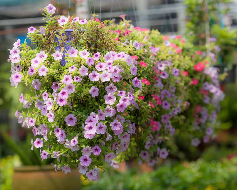How to Make a Hanging Basket Flower Ball | eBay