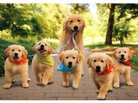 Experienced Dog-Walker, Doggy Day Care and Dog Sitter