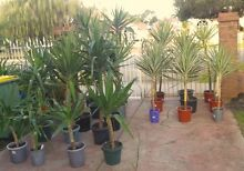 Cheap Hardy Plants For Your Garden - from $2 Perth Region Preview