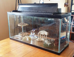 Large fish tank with accessories: all you need!