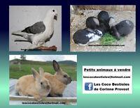 Plusieurs animaux à vendre Laval / North Shore Greater Montréal Preview