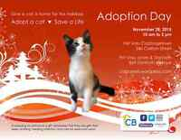 Home for the Holidays: Cat Rescue Adoptions