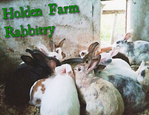 Herd of rabbits for sale!! Need sold ASAP!
