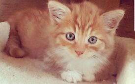 4 Chunky Beautiful Kittens For Sale