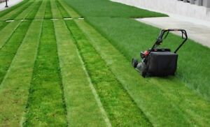 Lawn cutting services only $40