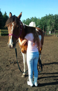 Horsemanship, Team Building and Leadership  Clinic for Children