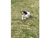 Professional Dog Walker/Home Boarder