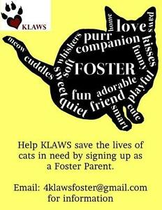 KLAWS: Foster Parents/Homes Needed for Kitties of all ages...